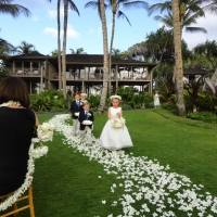 Wedding Ceremony Palm Grove